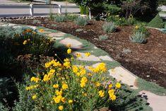 Colorado Xeriscape Gardens   All the Dirt on Gardening: 08.10