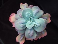 Echeveria 'Cameo' | Flickr - Zusung https://www.flickr.com/photos/33610540@N07/3175527760/