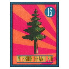 The pine tree art series Grand Fir, Pine Tree Art, Art Series, Stickers, Drawings, Interior, Trees, Drawing Trees, Sketches