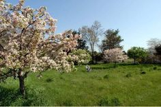 Wonderful OrchardsOutdoor ... Photo