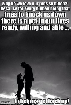 Pets are perfect