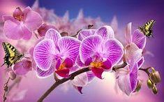 Resultado de imagen para foto de orquideas