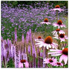 Coneflower & Liatris! Beautiful, from Two Women and a Hoe