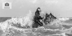 draft-horse in the sea, Knokke, Belgium