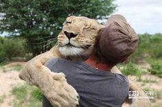萌!母獅討抱抱 感動千萬人