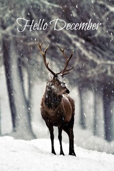 "creatures-alive: ""Red deer, in snow by Marcus Conway "" Vida Animal, Mundo Animal, Beautiful Creatures, Animals Beautiful, Cute Animals, Arctic Animals, Beautiful Gif, Wild Animals, Baby Animals"