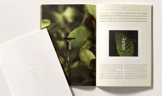Thymes branding by Duffy & Partners