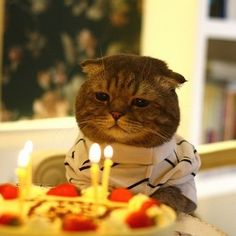 See the poor cute cat alone on its birthday.