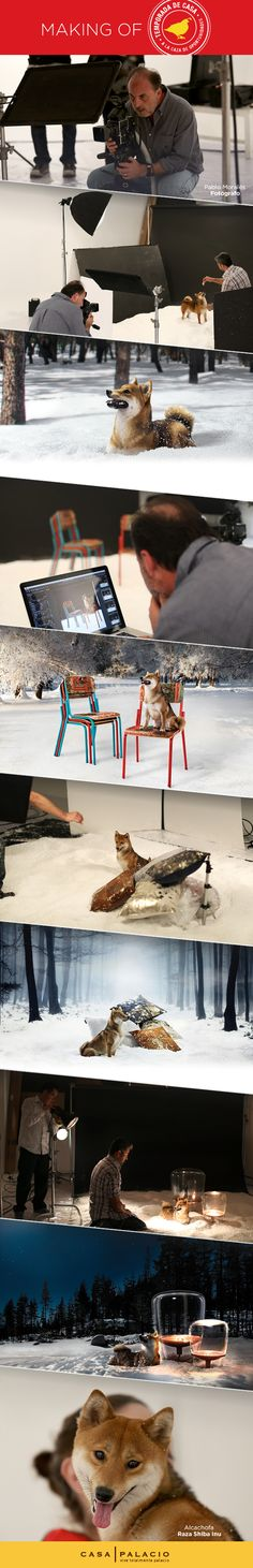 El miércoles conocerás nuestra próxima campaña; mira el detrás de cámara. #shibainu #perro #mascota