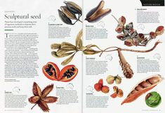 Australian Geographic Nature Watch article - Seedpods