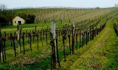 Weinort Stammersdorf Vienna, Vineyard, Outdoor, Places, Outdoors, Vineyard Vines, The Great Outdoors