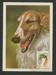 RUSSIA MK 1965 HUNDE COLLI HUND DOG MAXIMUMKARTE CARTE MAXIMUM CARD MC CM c9012