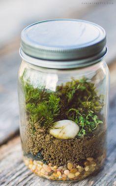DIY terrarium craft for kids.