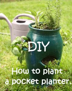DIY- How to plant a strawberry pot Strawberry planters are a great for small spaces and busy people. You are not limited to strawberries or hens and chicks. I use one for an herb planter, putting trailing herbs such as oregano and thyme into the lowest pockets, and tall growing plants like rosemary, basil, and sage into the top. http://www.shpottery.com/diy-how-to-plant-a-pocket-planter/