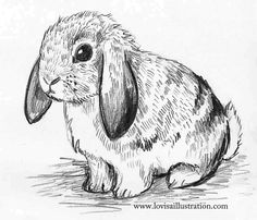 10 minute bunny Hedgehogs, Bunny, Fox, Creatures, Drawings, Beautiful, Rabbits, Foxes, Drawing