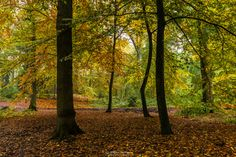 Autumn Dance - Dancing trees in beautiful autumn colors in the forest of estate 'Landgoed Geijsteren', Geijsteren, Netherlands.  If you like my work you can also follow me at facebook.com/williammevissenphotography :)