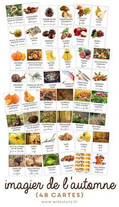 48 cartes de nomenclature imagier de l'automne & sélection de livres + activités - Milestory