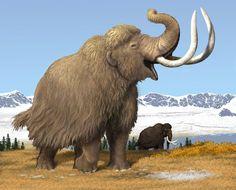 Blonde Woolly Mammoth, Carl Buell