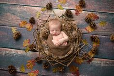 www.stefaniepolitiphotography.com, newborn photography, newborn photographer, NJ newborn photographer, Hunterdon County newborn photographer, newborn baby boy, Clinton newborn photographer, fall, autumn, wreath, pinecones, leaves