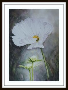 Cosmos 2 ARTIST LORNA PAULS Watercolour done on A3 200g ProArt Paper Done March 2017 Watercolour Art, A3, Cosmos, Wildlife, March, Paper, Artist, Painting, Artists