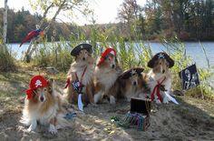 Collie Rescue of the Carolinas-Halloween