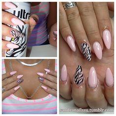 baby pink zebra