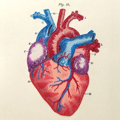 Heart Anatomy Journal. Heart Notebook. by FabulousCatPapers