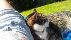 Sunbathing Meggy-moo