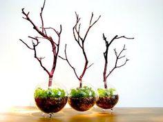 Modern Globe Manzanita Forest Moss Terrarium by TinyTerrains