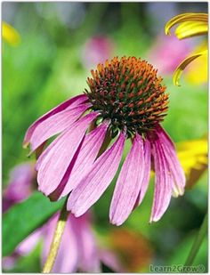 Perennial Flowers Be sure to add perennial flowers with daisy-like faces to your garden – that means including blooms like Shasta daisy and purple coneflower (shown here).