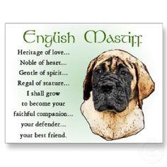 I love my English Mastiff Bruno!