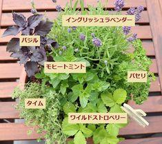 Growing Vegetables, Garden Planning, Home And Garden, Herbs, Green, Flowers, Plants, Drink, Food