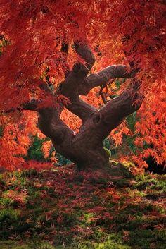 Dragon Tree, Japanese Garden -- Portland, Oregon