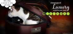 Another great giveaway at Cat Wisdom 101! // sleepypod giveaway