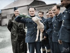 A R.A.F squadron adopted a lamb as a mascot and named him Aloysius. The lamb and one of the sergeants quickly became best friends.