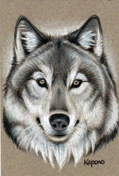 Wolf Painting, Painting & Drawing, Wolf Face Drawing, Animal Drawings, Cool Drawings, Wolf Tattoo Design, Howl At The Moon, Wolf Quotes, Husky