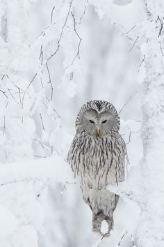 Eulen / Owls + Winter