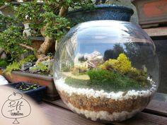 Family with Penny #puff #terrariums #terrarium #home #work #business #decor #decoration #plant #garden #mini #minitureworld #wedding #centerpiece #weddingfavors #moss #reindeermoss #mason #balls #mushroom #apartmenttherapy #christmas #gift #DIY #crafts #Inmemoryof #dedicate #fishbowl #family #dog