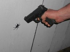 This is exactly how I feel about spiders