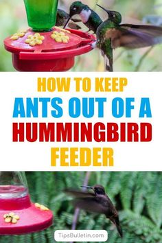 Find out how to keep ants out of hummingbird feeder with these simple tips and tricks. Learn how to get rid of ants easily and keep the hummingbirds happy. These simple techniques will also help keep ants out of the bird feeders in your backyard. Garden Insects, Garden Pests, Water Plants, Cool Plants, Sugar Ants, Hummingbird Food, Hummingbird Garden, Get Rid Of Ants, Succulent Landscaping