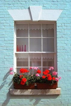 Window box filled with red and pink geraniums, against an aqua painted brick wall.