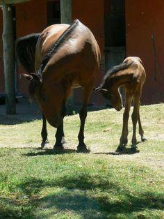 Synchronized horsing around.