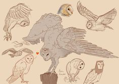 Decembird Barn Owl Study by AlessiaAuricchio on DeviantArt Animal Sketches, Animal Drawings, Art Sketches, Art Drawings, Drawing Owls, Owl Sketch, Owl Wings, Wings Drawing, Owl Quilts