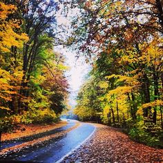 Five Ways to Fall in Love with Autumn in Michigan.