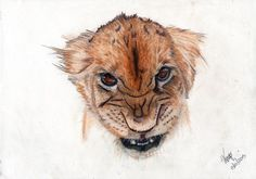 Colored pencil drawing of a Lion cub. The common pencil (the word derives from the latin 'peniculus' meaning brush), used by draughtsmen around the world, is the most immediate and sensitive of the drawing media, being as capable of producing a quick sketch or a finely worked drawing. Pencil marks vary according to the hardness of the graphite lead in the shaft. The harder the lead (and the sharper the tip) the finer the line. Pencils are a dry medium, in contrast to pens which apply…