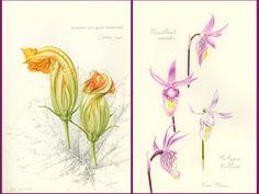 Practice Makes Perfect: A Botanical Illustration Sketchbook by School of Botanical Art and Illustration — Kickstarter