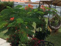 Frambollan en bonsai on Pinterest | Bonsai