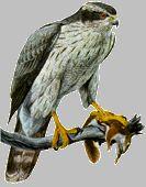 oiseaux - Page 132