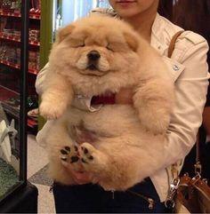 Must see Spherical Chubby Adorable Dog - 5d952b52fe9586125fd66e1dc5b10898  Photograph_369344  .jpg