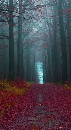 ✯ Fall path  Just makes you want to take a long slow stroll